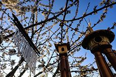Carillon et chaine a vent